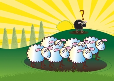 Sheep blog